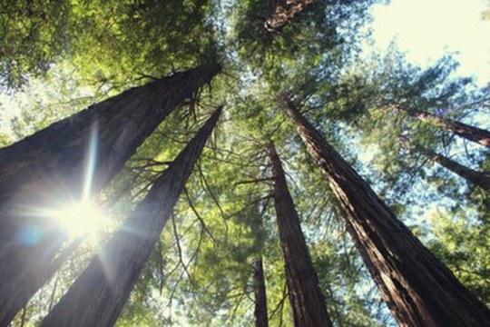 Riprodurre la fotosintesi naturale per combattere il cambiamento climatico