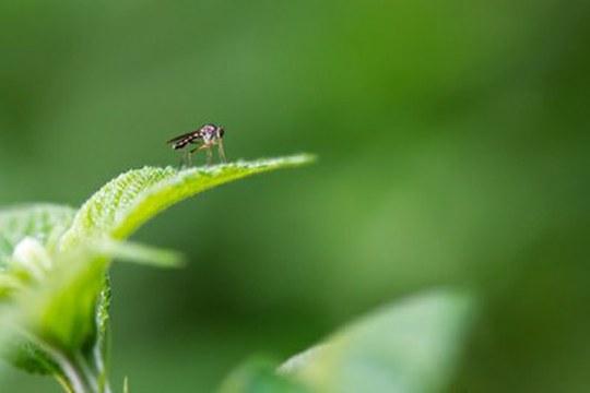 Zanzare sotto controllo: arriva la app MosquitoAlert